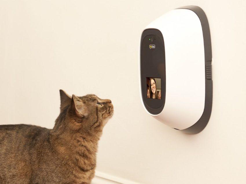 Meraviglie della tecnologia: lo smartphone per cani e gatti