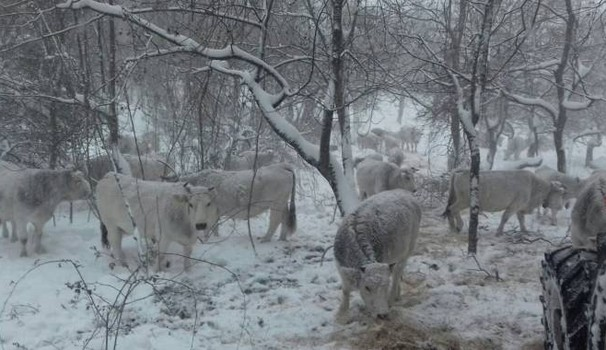 I terremotati sotto la neve la resa incondizionata del for Struttura politica italiana