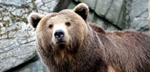Orso aggredisce pensionato nei boschi del Trentino. E se fosse stato il pensionato ad aggredire l'orso?